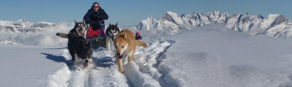 Hundeschlittenfahrten Flumserberg